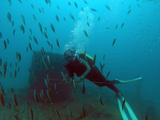 A diver approaching the Tug Kathleen in the Atlantic Ocean off St. Lucie County is surrounded by fish.