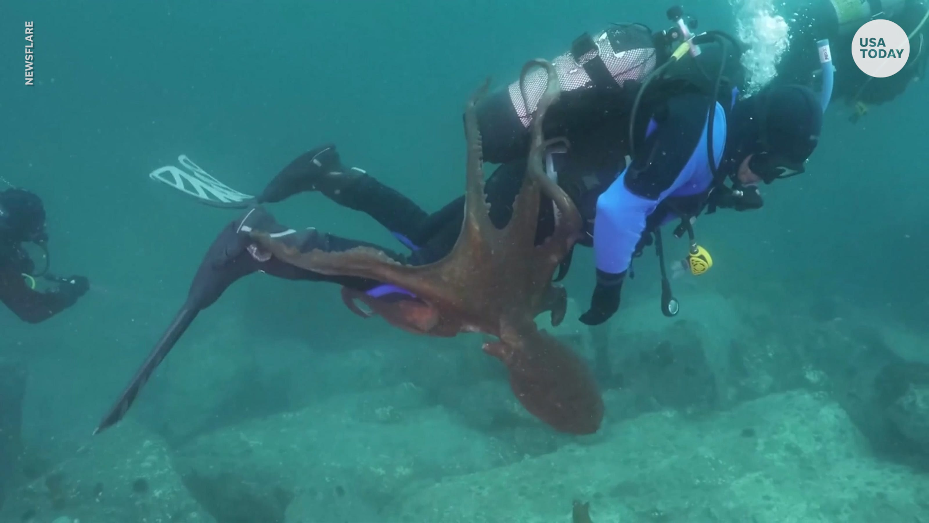 Giant octopus attacks diver in Sea of Japan