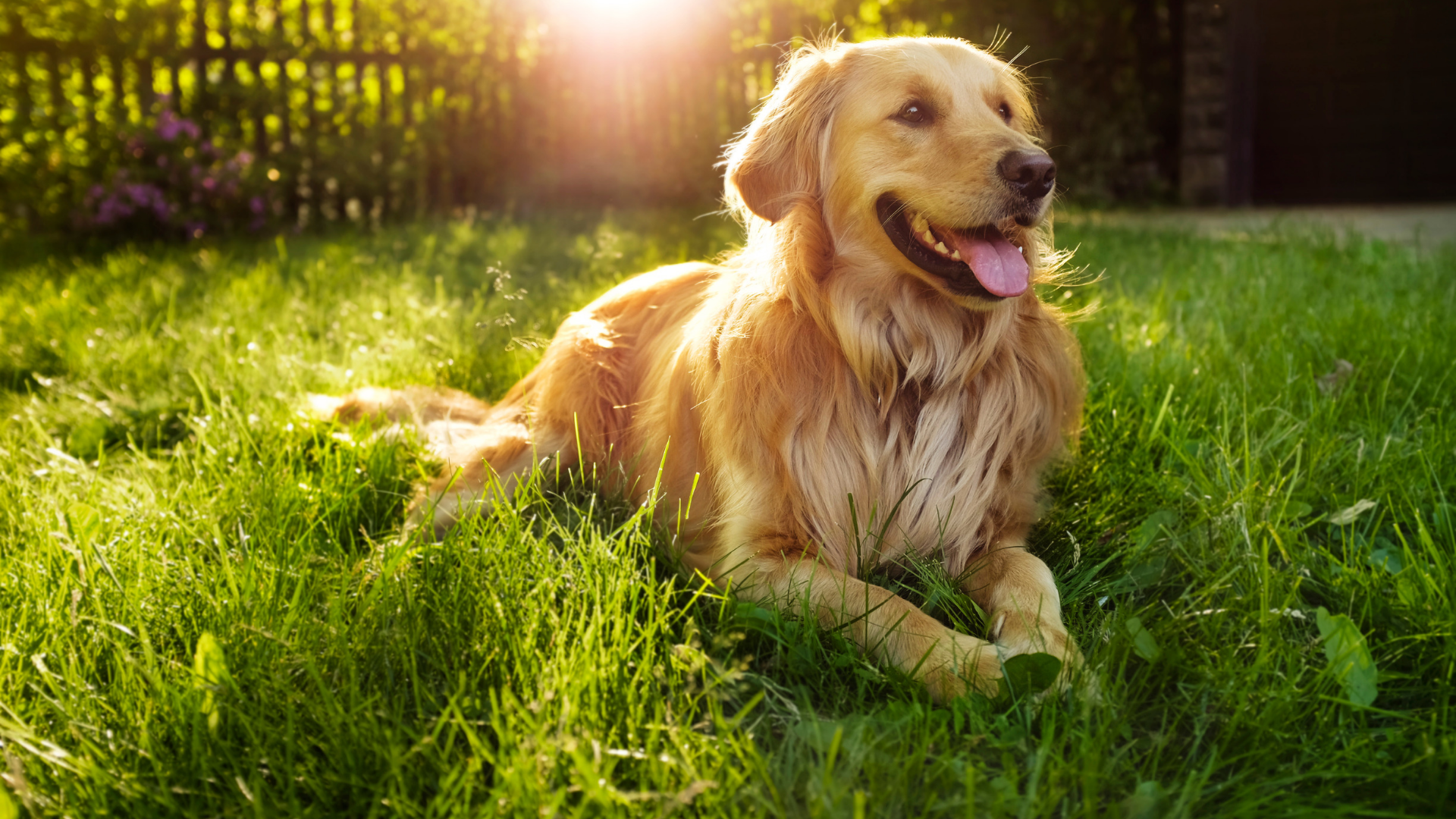 How to keep your pets safe in hot weather