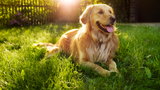 Here's some tips to keep your pets safe when the temperatures start to soar
