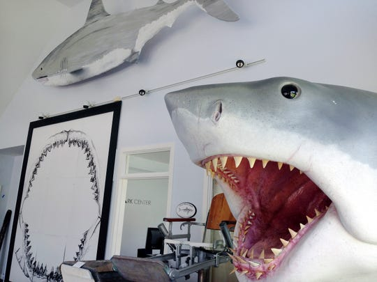 In this May 25, 2016, file photo, replicas of great white sharks are displayed at the Atlantic White Shark Conservancy's Chatham Shark Center in Chatham, Mass.