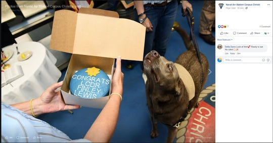 Finley Lewis, a service dog, was promoted to the rank of Lt. Commander during a ceremony at Naval Air Station - Corpus Christi on Thursday, June 20, 2019. He was given a cake to celebrate his promotion at Naval Health Clinic.