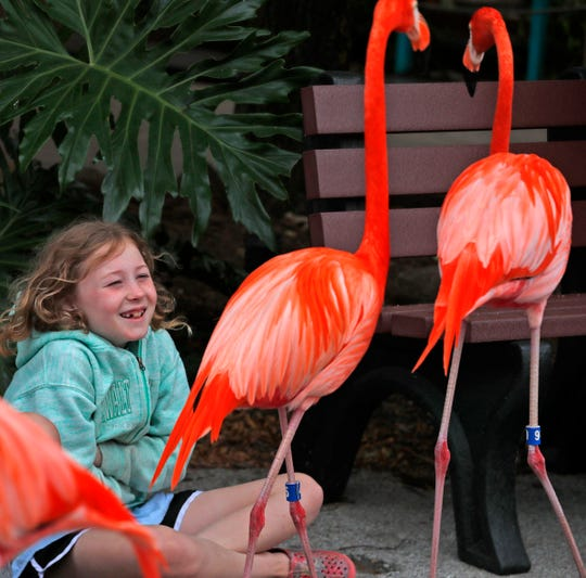 Kainsley Ehresman laughs while she gets a close-up view of flamingos during the Flamingo Mingle at the Indianapolis Zoo, Thursday, June 13, 2019.