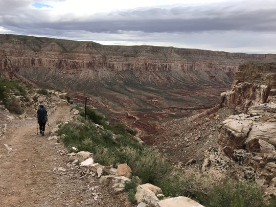 Once past the switchbacks on the way to Havasupai Falls, the path levels out before dropping further into the canyon.