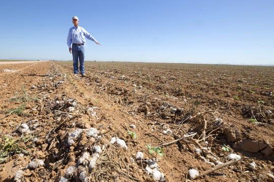 Dan Thelander, un socio de Tempe Farming Co. en Maricopa, dice que puede tener que dejar en barbecho 2,000 de sus 5,000 acres debido a los recortes de agua que se avecinan.