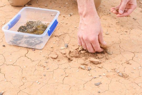 """En el """"Dust Corridor"""" de la I-10 al norte de Tucson, el investigador de la Universidad de Arizona Joey Blankinship y su equipo están tratando de cambiar la composición del suelo con compuestos para agregar humedad y microbios que le dan al suelo suelto cierta estabilidad estructural."""