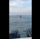 Must-see video shows whale surfacing near Ocean City