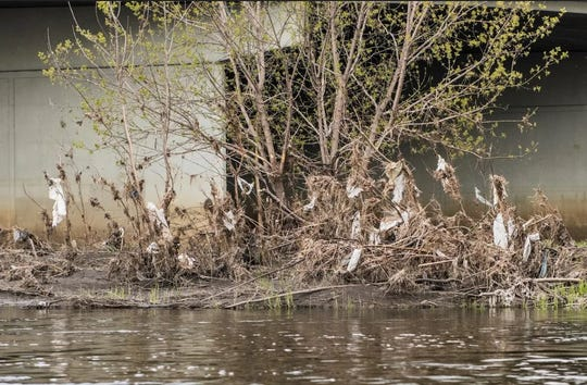 Plastic bags get caught in the foliage along the Big Sioux River each spring.