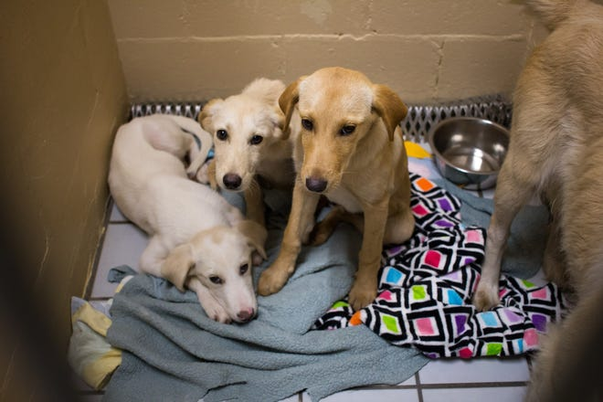 Everett's siblings after being retrieved from Liberty County.