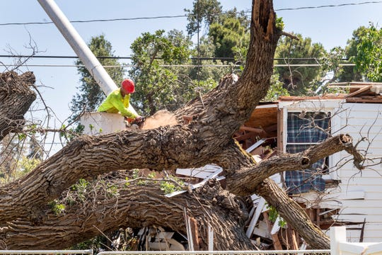A large, maybe 200-year-old, oak tree fell in the 800 block of East Apricot Avenue early Wednesday morning, The massive limbs crushed the small two-story home displacing two elderly residents. Crews worked into the late afternoon cutting it away from the house.