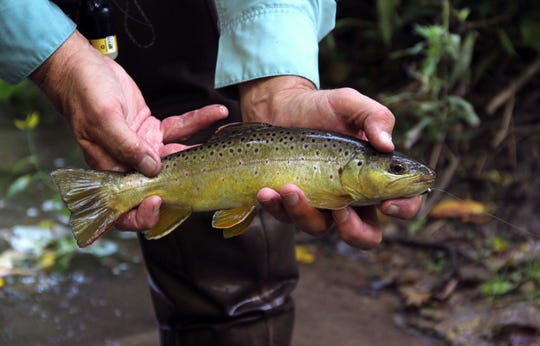 DNR crafts first inland trout management plan, seeks comments