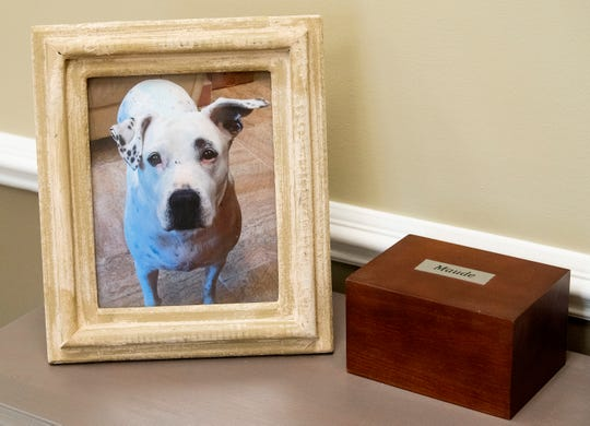 Maude was a previous shelter dog that lived in the offices at the Montgomery Humane Society in Montgomery, Ala. Maude's photo and boxed ashes are displayed at the Humane Society.