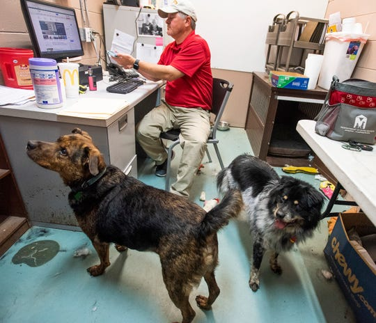 Denton Hawk works in his office at the Montgomery Humane Society in Montgomery, Ala., on Friday June 21, 2019 with his dog from home, Bear, left, and Spooky, right, a long term rehab dog who now resides in the offices at the shelter.