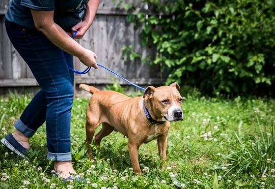 Melissa Blair walks Piper in a yard outside of the Muncie Animal Care and Services facility. Piper, a 6-year-old pit bull mix, was picked up by animal control last February.