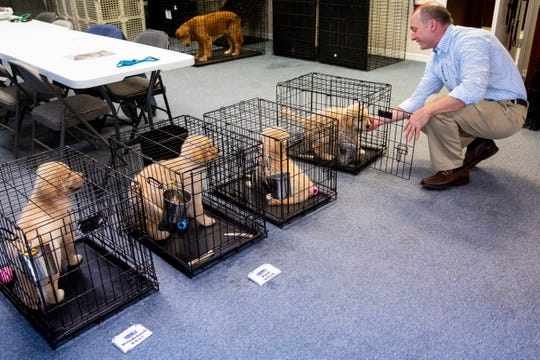 Board President Kyle Reed puts a puppy back in his crate after playing with him at Golden PAWS Assistance Dogs in Naples on Thursday, June 20, 2019. The dogs are trained by volunteers at Golden PAWS and are typically matched with veterans when they are between two and three years old.
