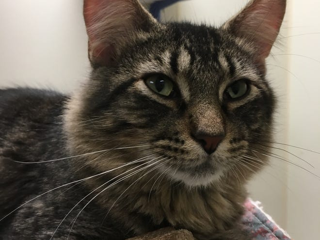 Goose along with his brother, Gus, are cat brothers and are looking for an energetic family to love.