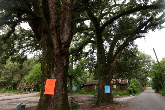 Trees at least a century old in the Boynton Still neighborhood have signs posted on them as a form of protest from concerned citizens against the trees being cut down for development Friday, June 21, 2019.