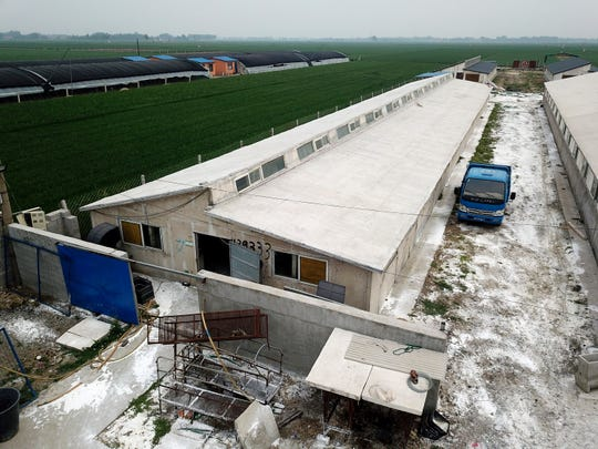 In this May 8, 2019, aerial photo, white disinfectant powder is sprinkled on the soil around a pig farm in Jiangjiaqiao village in northern China's Hebei Province. Asian nations are scrambling to contain the spread of the highly contagious African swine fever with Vietnam culling 2.5 million pigs and China reporting more than a million dead in an unprecedentedly huge epidemic some governments fear has gone out of control.