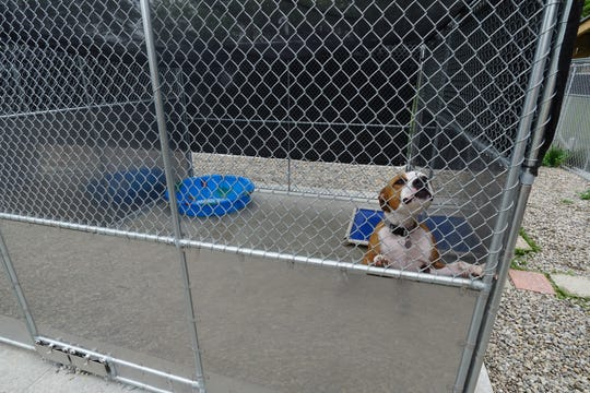 Almost Home treats hundreds of animals each year.