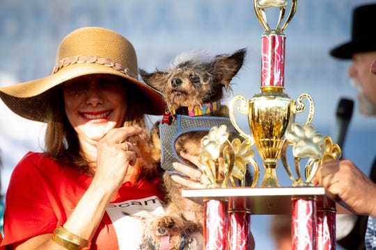 Scamp the Tramp is held by Darlene Wright after winning the World's Ugliest Dog Contest at the Sonoma-Marin Fair in Petaluma, Calif., on Friday.