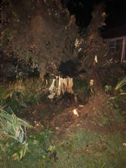A downed tree is seen after severe storms Friday night near Glenrose Avenue and Thompson Lane in Nashville.