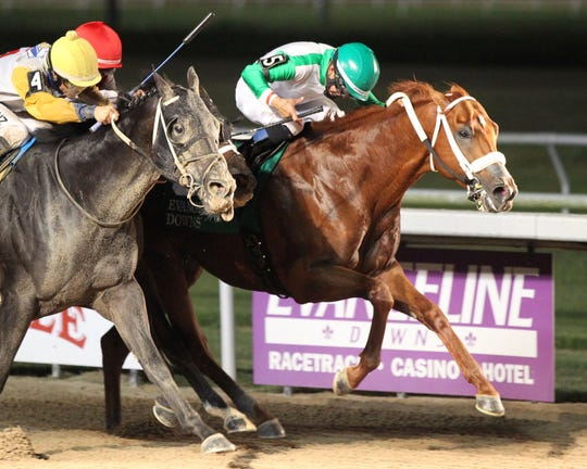 Mocito Rojo has now won all five lifetime starts over the main track at Evangeline Downs.
