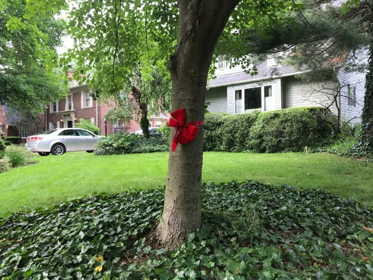 Red ribbons dot trees in the neighborhood surrounding Trombly Elementary School in Grosse Pointe Park. Residents are showing their support for the school as the Grosse Pointe School Board prepare to vote on whether or not to close the school.