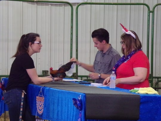 Judge Melody Teller works with assistant, and future judge, Colton Friedel as she judges the Serama Tabletop Show during the Sauk Trail Poultry Show in Hillsdale, MI.