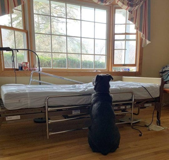 Moose the dog waitis by his recently deceased owner's empty hospital bed.