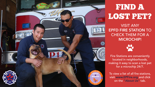 Find a lost pet? Take it to the El Paso Fire Department for microchip scanning.