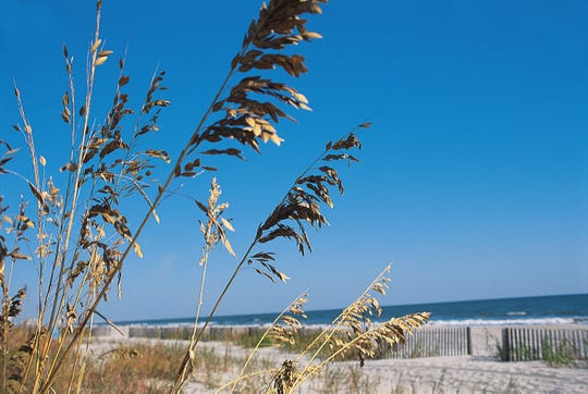Sea oats wave in the breeze along the Grand Strand in Myrtle Beach, SC.
