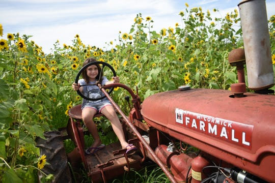 Juila Dailey sits on an old red tractor located at the end of a few rows of sunflowers located in Aunt Julia's Garden. Julia and Aunt Julia's Garden are named for one of Julia's ancestors. The garden is a popular place for photographers.