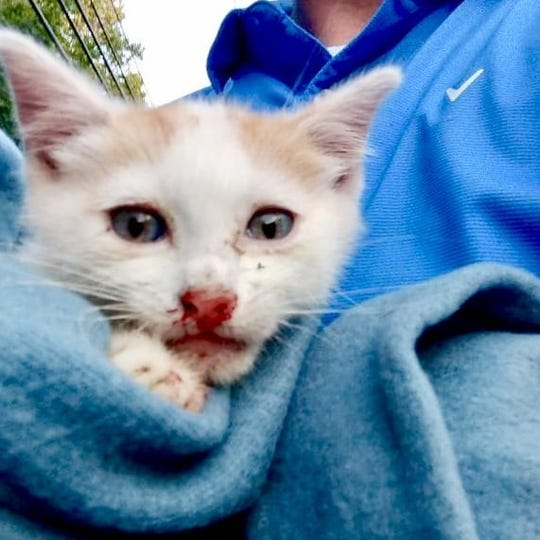 This kitten survived being thrown out of a moving vehicle in Toms River on Saturday, but then escaped from the arms of a Good Samaritan shortly after this photo was taken.