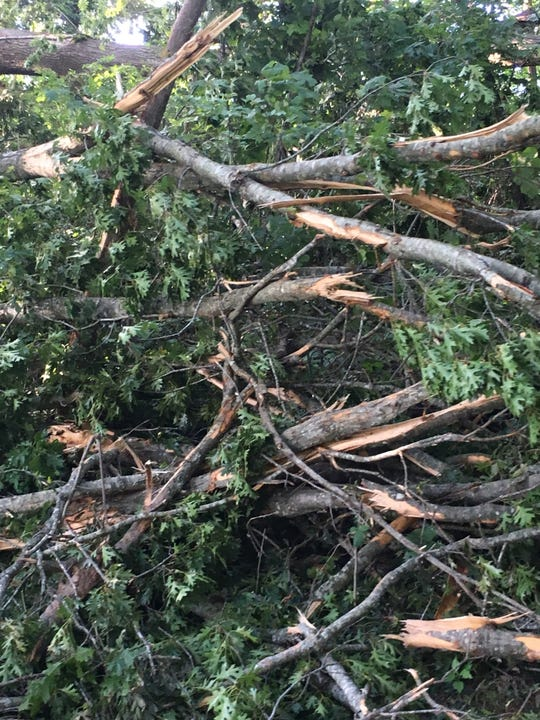 Fallen limbs and trees were scattered throughout Springfield's J. Travis Price Park after storms roared through Robertson County Friday.