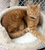 Sundance is available for adoption at 10807 N. 96th Ave. in Peoria. For more information, call 623-773-2246.