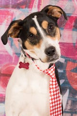 Luke is available for adoption at 952 W Melody Ave. in Gilbert. For more information, call 480-497-8296 or email FFLdogs@azfriends.com.