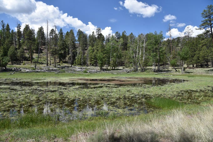 Crater Lake fills the vent of an extinct cinder cone north of Flagstaff.
