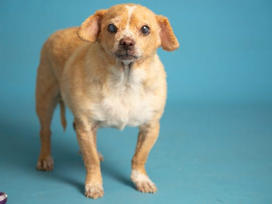 Wilson is available for adoption on June 30, 2019, at noon at 1521 W. Dobbins Road in Phoenix. For more information, call 602-997-7585 and ask for animal number 604977.