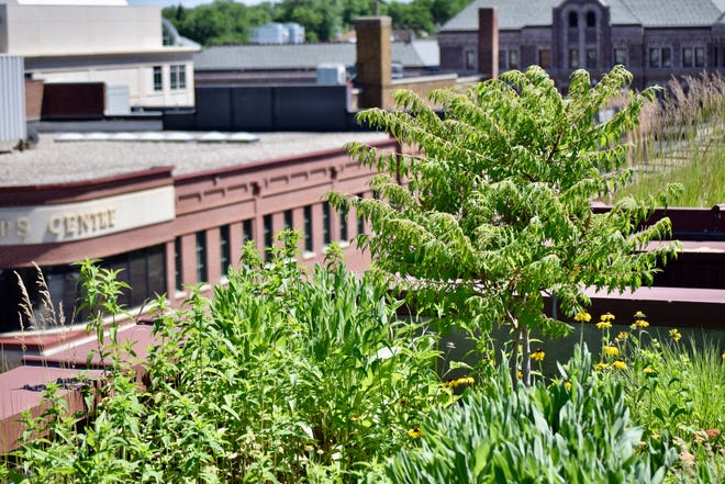 The Dandar's rooftop garden is located onto of the apartments of the Boyce-Greeley Building