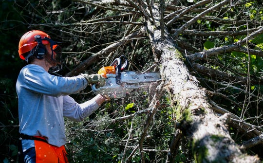 Seth Wheeler, a crew chief with the Watershed Conservation Corps, uses a chain saw to cut up a cedar tree at Wilson's Creek National Battlefield on Tuesday, June 25, 2019.