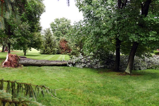 A tree was uprooted at a home off Center Drive on Monday afternoon, the result of a severe storm in Muskingum County. High winds, rain and lightning caused extensive tree and power line damage througout the region.