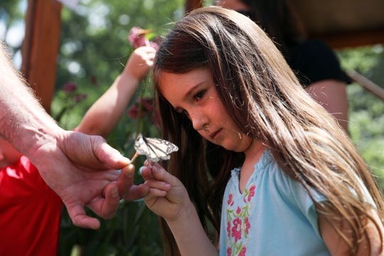 River Pearl offers a butterfly some watermelon juice on a cotton swab at Clary Garden's butterfly enclosure.