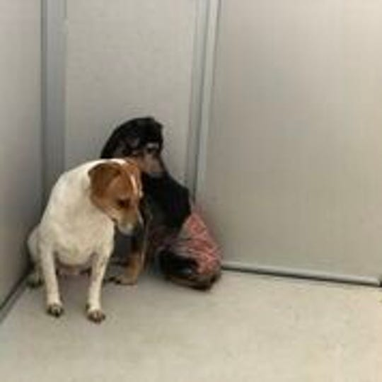 Thirteen dogs were found in an Iowa home in a muddy, chain-linked dog run.