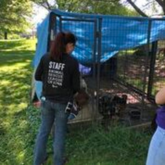 Dogs found in Exira Iowa appeared to be un-socialized, and many had never been given a name.