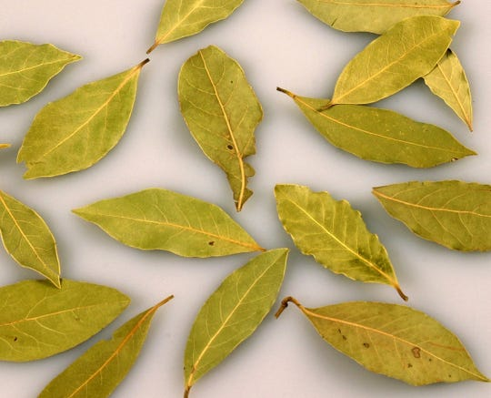 An online post claims bay leaves can cure virtually any ailment.
