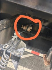A kitten, later named Miracle, was spotted by a car driver clinging to the underside of a moving truck. The kitten was rescued and cared for by Morristown-based 911 Dog and Cat Rescue.