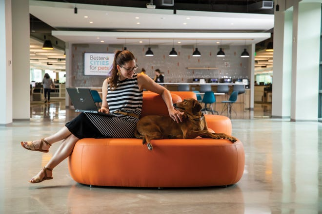 Pets are a huge part of the workspace environment of the new office building.