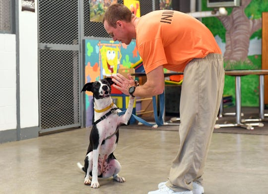 Justin Goens receives a high-five from Nala, a dog from the Paroled Pups training program, Wednesday, June 26, at the South Dakota State Penitentiary in Sioux Falls.