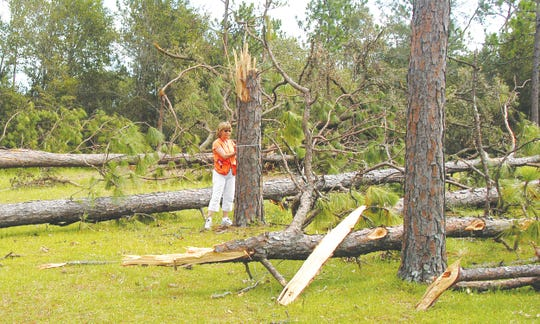 UF/IFAS researchers conduct post-storm inventory data on trees to help Florida residents make better-informed decisions regarding trees and hurricanes.