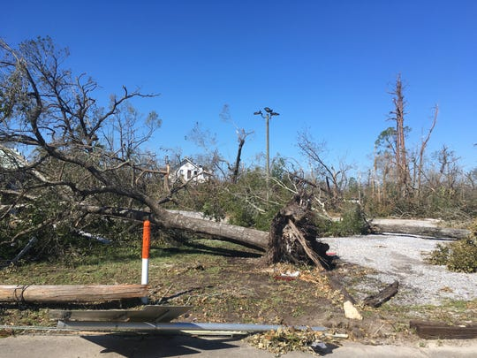 n the aftermath of Hurricane Michael, it's easy to understand why you may think twice about leaving or replanting trees near your home. This was Panama City just days after the hurricane.